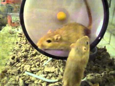 Gerbils on a Bender