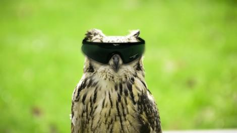 Wisdom Owl